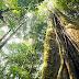 Catalogar todas as espécies de árvores da Amazônia levaria 300 anos, mostra levantamento