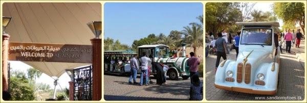 Al Ain Zoo entry and rides