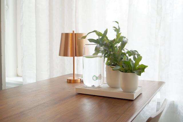 Planteros pikaplant