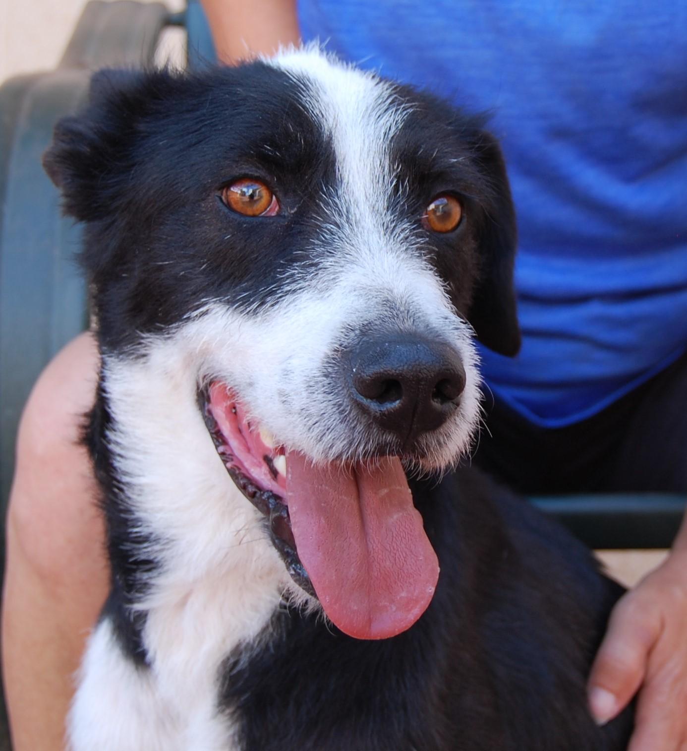 Nevada spca animal rescue bam bam for Dog pound las vegas nevada