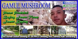 Desain mmt gamul mushroom