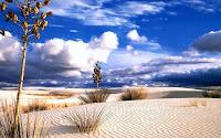 gambar bioma gurun