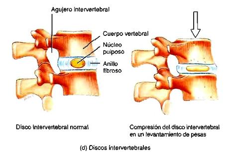 Columna vertebral vértebras