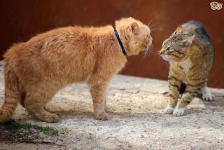 Arti Meongan Kucing
