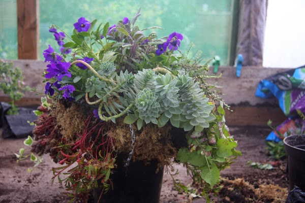 How to Make Winter Hanging Baskets