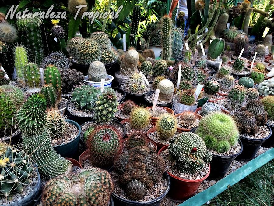 Colección de cactáceas