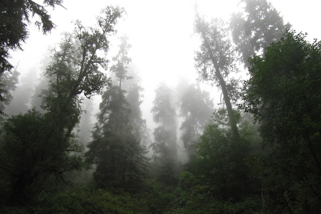 The dark and mysterious forest almost leans in near Munsen Creek Falls in Oregon...