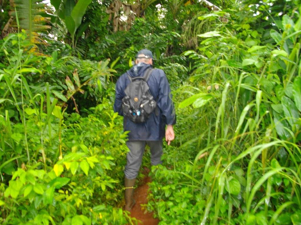 Filip Maenhout In Het Tropisch Regenwoud