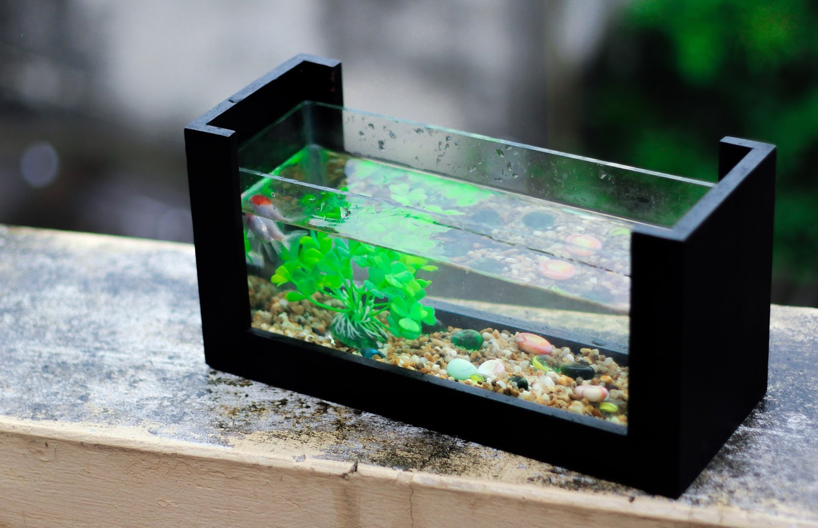 Picture of a small fish tank.