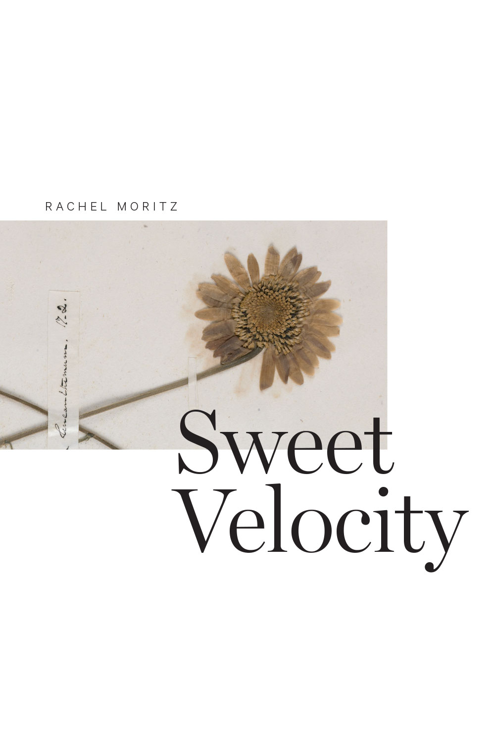 Rob mclennans blog rachel moritz sweet velocity in moritz poems the sweet velocity of time only increases in speed and intensity including a series of moments both caught and missed attempting to fandeluxe Gallery