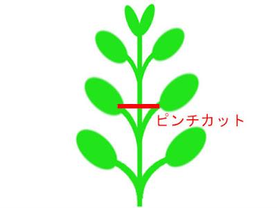 ハイグロフィラなどの対生の水草模式図(ピンチカット)