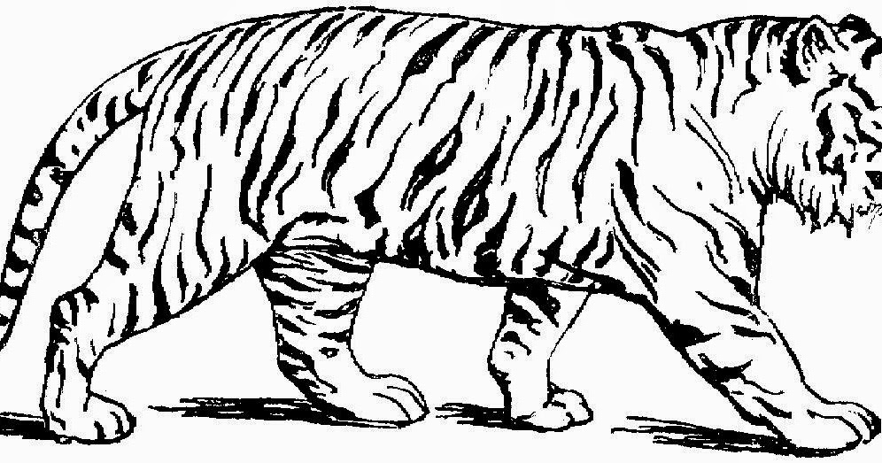 Tiger pictures to color free coloring pictures for Free tiger coloring pages