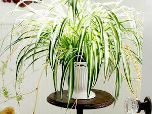 Manfaat Plastik Uv - 7 Flora Hias Untuk Mempercantik Rumah Anda