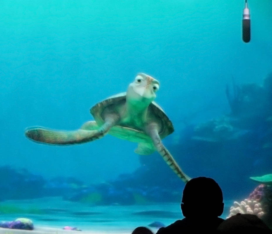 9 Finding Nemo The Turtles Characters Wallpaper