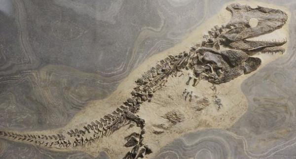 Κίνα: Βρέθηκαν απολιθώματα ζώων που κατοικούσαν στη Γη πριν από 500 εκατομμύρια χρόνια