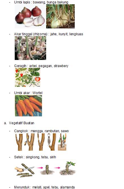 Contoh Judul Skripsi Pendidikan Kimia Terbaru Download Contoh Skripsi Teknik Mesin Lengkap Poostaka 438 X 665 Png 157kb Perkembangbiakan Hewan Dan Tumbuhan Asa