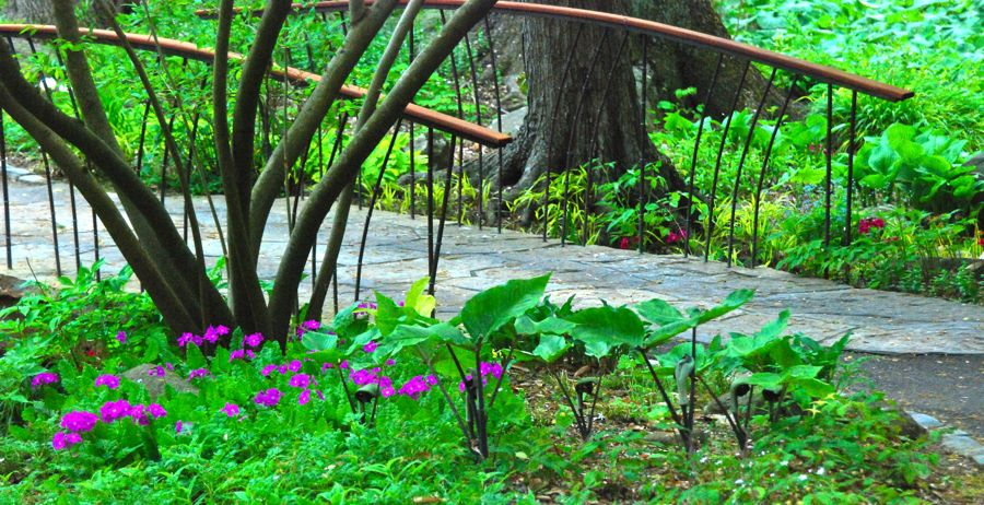 Chanticleer's Asian bridge... corresponding to this multi-stemmed tree and the dark-stemmed Arisaema.