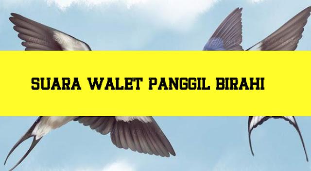 Download Suara Walet Panggil Birahi