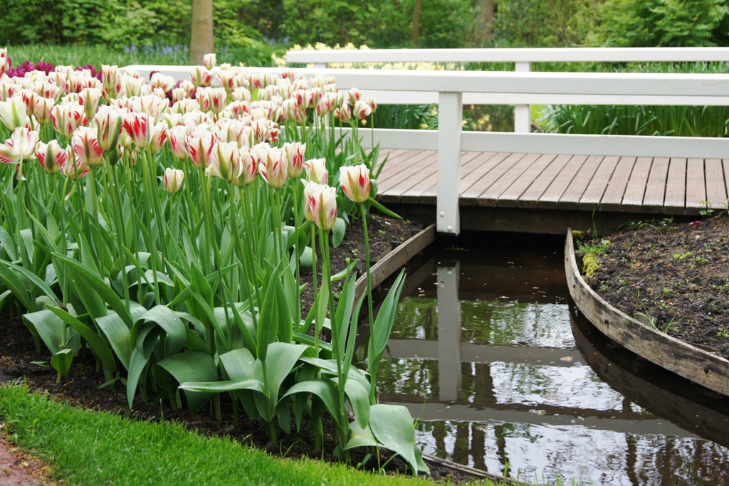 Festiwal tulipanów w ogrodach Keukenhof