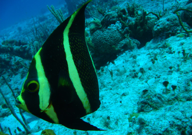 black and yellow fish