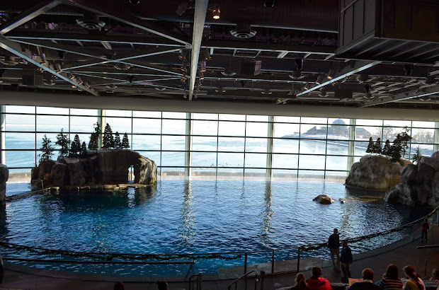 ' Jilly. Visiting Shedd Aquarium In Chicago