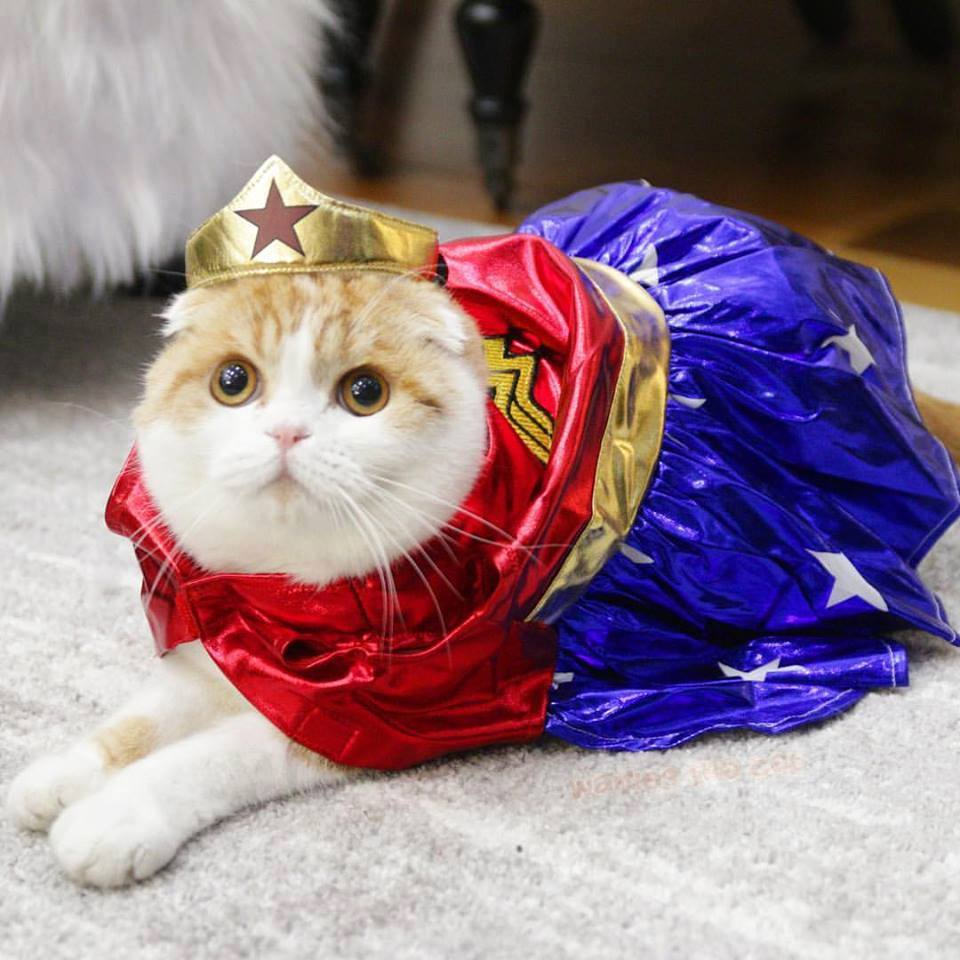 Kumpulan Gambar Kucing Lucu dan Imut - Mas Helmi Blog