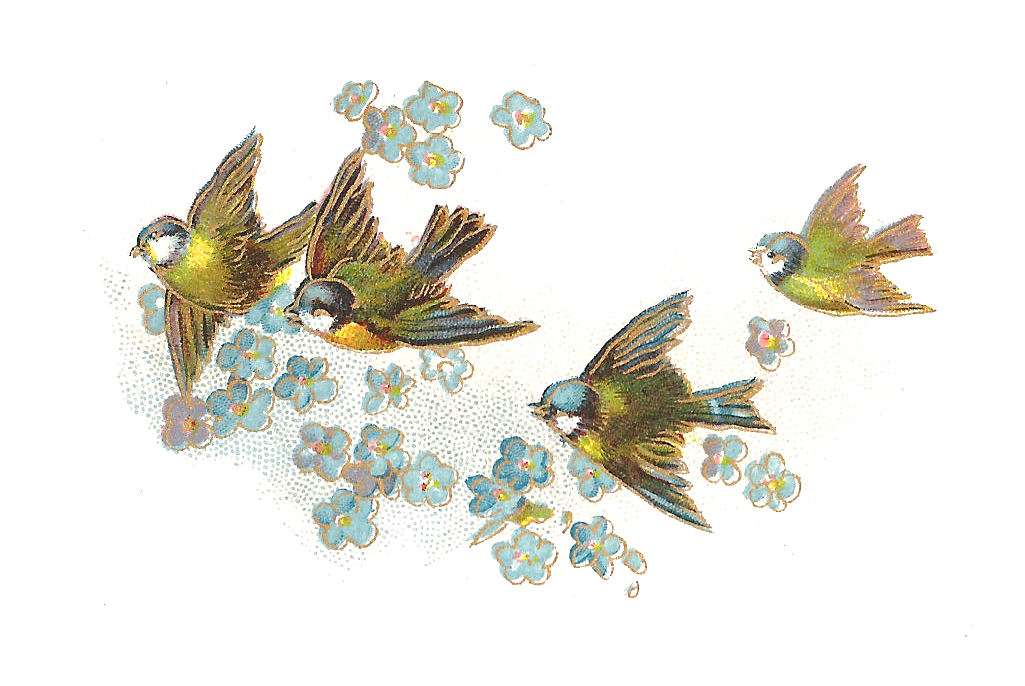 clipart flowers and birds - photo #50