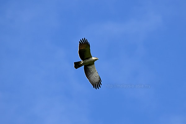 Birding Event in Malaysia