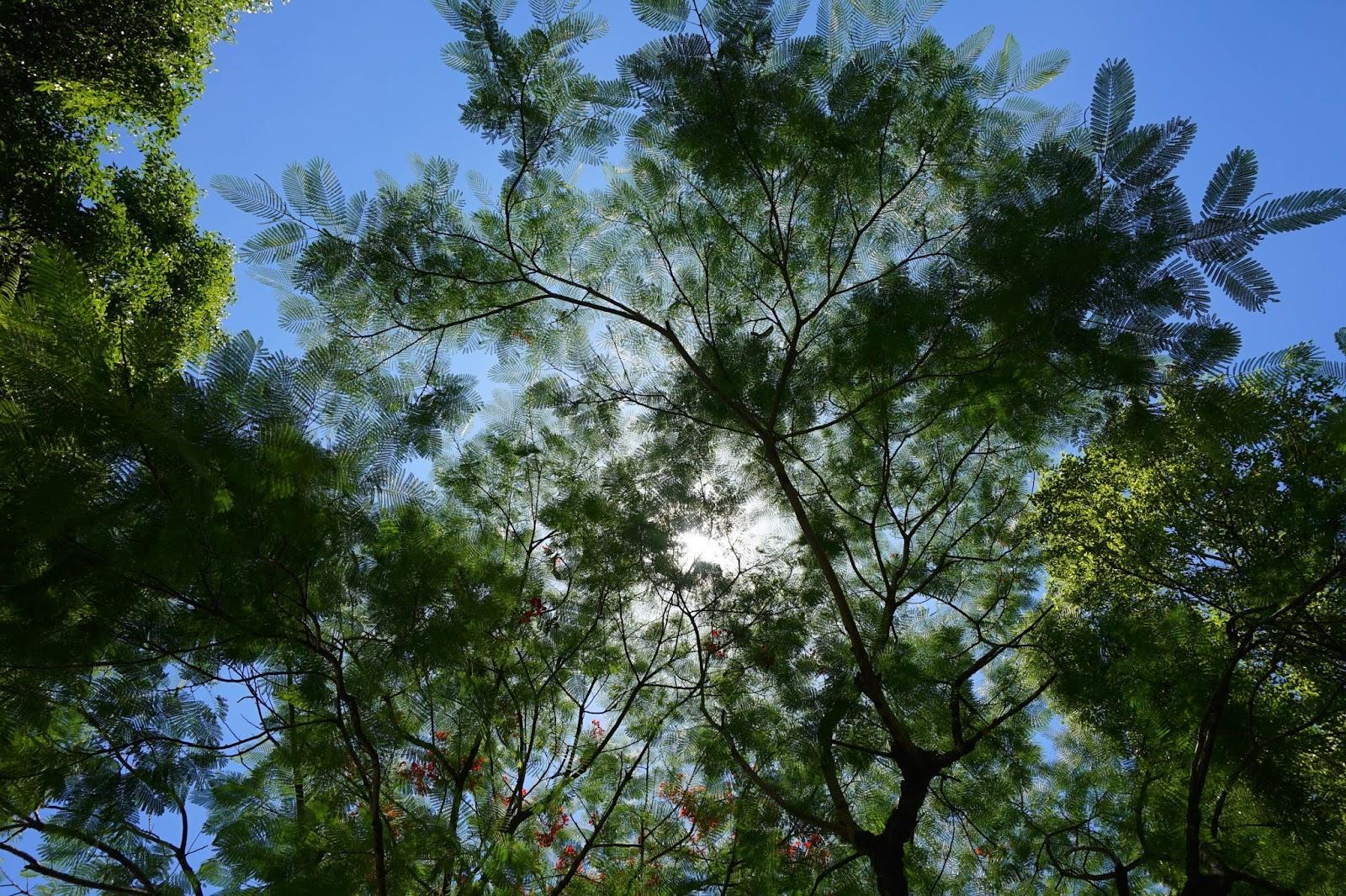2-beautyanxiety.com-Hualien%2BTravel-Cultural%2BPark%2BForest-IMG_1356-beautyanxiety