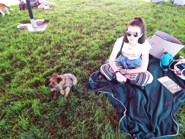 Small border terrier and girl in sun glasses on a blanket on grass