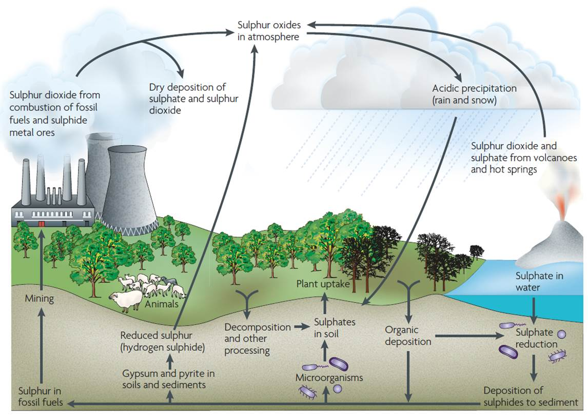 engineering environment diagram of the sulfur cycle
