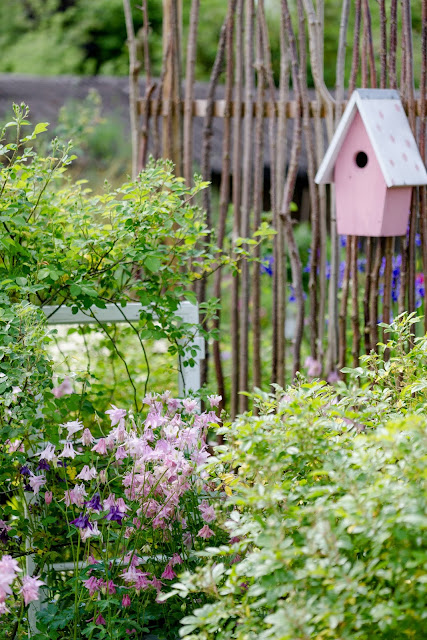 Gartenglück Ende Mai, Pomponetti, Akkelei, Sichtschutzzaun