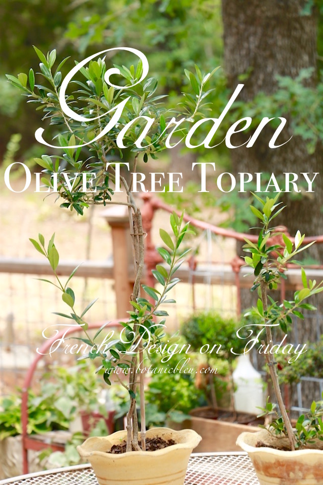 garden-olive-tree-topiaries-in-french-design