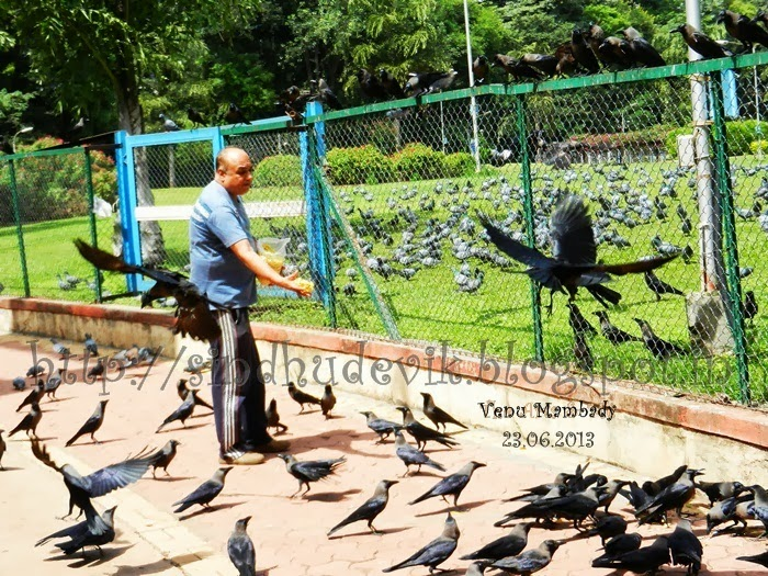 A bird lover surrounded by a number of pigeons and crows, feeding snacks to the eagerly waiting birds.
