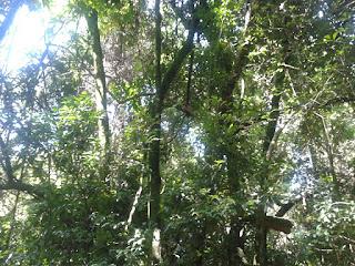 Biomassa e a produção de Biodiesel no Brasil  Texto para aula de Biologia