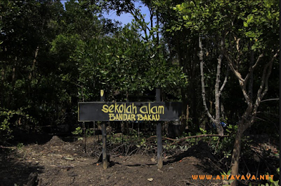 Sekolah Alam Bandar Bakau, Dumai