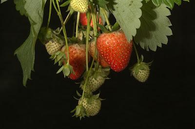 fresas en la cocina de la abuela