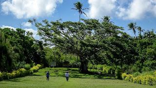 Tongatapus religious tree