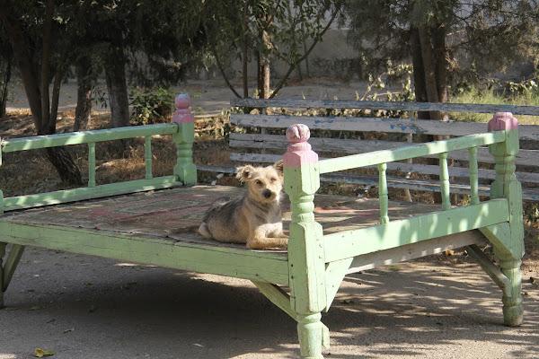 Ouzbékistan, Andijan, parc Navoï, tapshan, tapchane, © L. Gigout, 2012