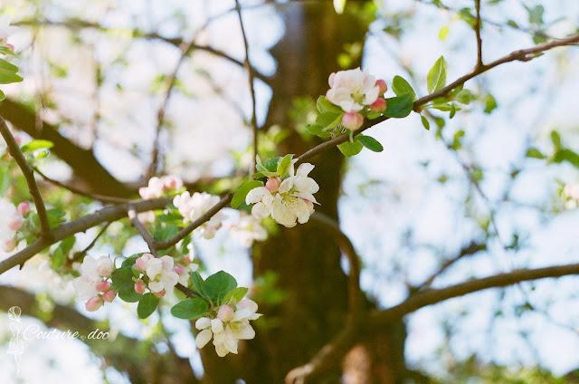 wiosna, drzewa, kwiaty