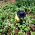7 Ide Bisnis dan Peluang Usaha dengan Modal Kecil di Pedesaan