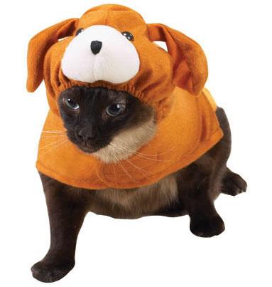 Catsparella: Top 10 Pet Halloween Costumes of 2011 ...