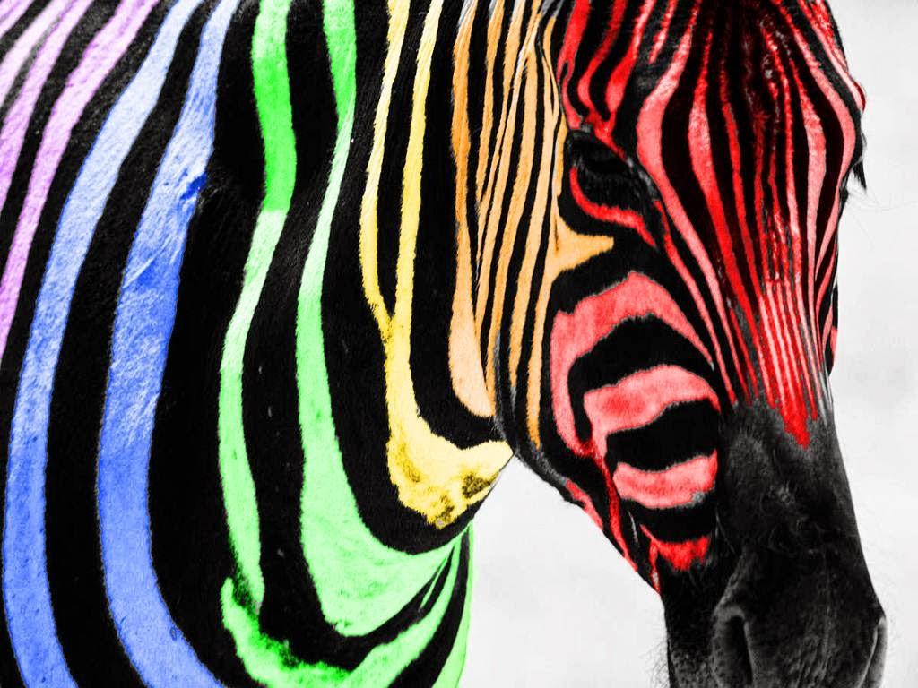 Best Windows 7 Wallpapers Rainbow Zebra Wallpaper Desktop