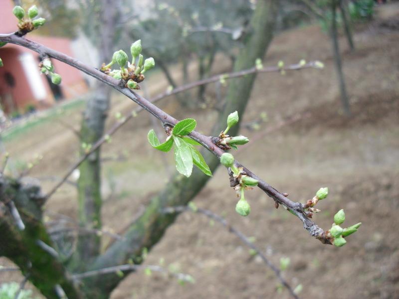 El huerto del lopez preparando la nueva temporada de los for Arboles frutales de hoja caduca