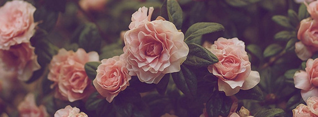 Jurlique Rose Moisture Plus Skincare at Le Reve Spa