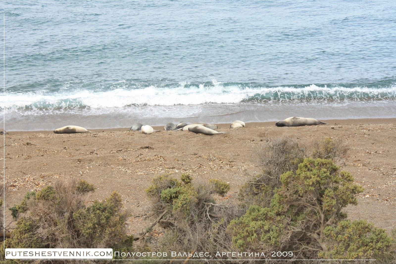Морские млекопитающие на берегу Атлантического океана