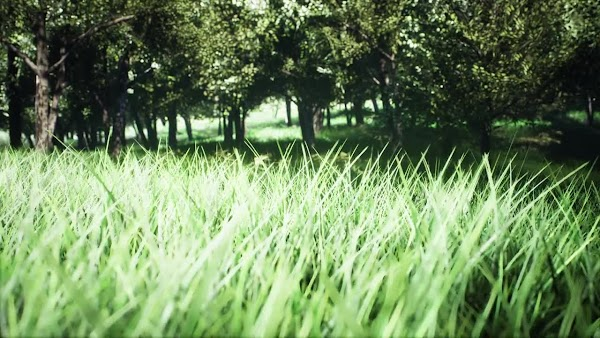 Exploring A Green Park - Stock Motion Graphics | Motionarray
