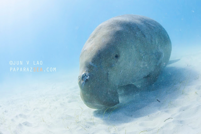 Scuba Diving, Underwater Photography, Dugong Dive, Learn Scuba Manila, Jun Lao
