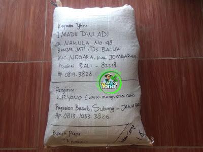 Benih pesanan I MADE DWI ADI Jembaran, Bali   (Setelah Packing)