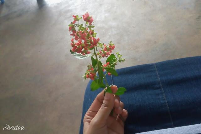 Bunga pokok inai